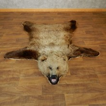 Grizzly Bear Taxidermy Rug Mount For Sale #18211 @ The Taxidermy Store