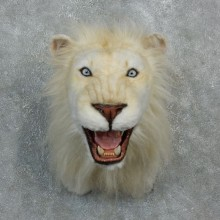Reproduction African White Lion Shoulder Mount #18295 For Sale @ The Taxidermy Store