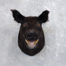 Wild Boar Shoulder Mount For Sale #18727 @ The Taxidermy Store