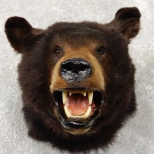 Black Bear Head Mount For Sale #18777 @ The Taxidermy Store