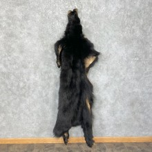 Tanned Black Bear Wall Hanging Pelt For Sale #25314 - The Taxidermy Store