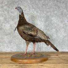 Eastern Turkey Taxidermy Bird Mount For Sale