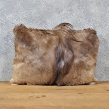 African Springbok Hide Pillow #12050 For Sale @ The Taxidermy Store