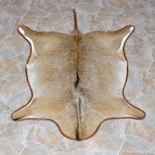 African Roan Full Rug Mount #12332 For Sale @ The Taxidermy Store
