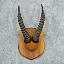 African Topi Taxidermy Horn Plaque M1 #12779 For Sale @ The Taxidermy Store