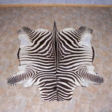 Zebra Rug Taxidermy Mount #10955 For Sale @ The Taxidermy Store