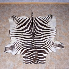 Zebra Rug Taxidermy Mount #10956 For Sale @ The Taxidermy Store