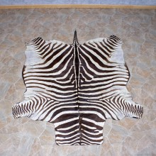Zebra Rug Taxidermy Mount #10958 For Sale @ The Taxidermy Store