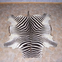 Zebra Rug Taxidermy Mount #10959 For Sale @ The Taxidermy Store