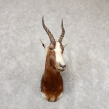African Blesbok Shoulder Mount For Sale #18839 @ The Taxidermy Store