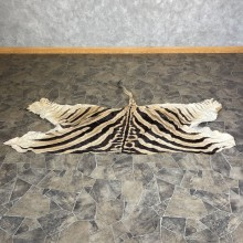 African Zebra Back Hide For Sale #25366 @ The Taxidermy Store