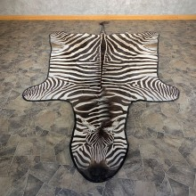 African Zebra Full-Size Taxidermy Rug For Sale #21184 @ The Taxidermy Store