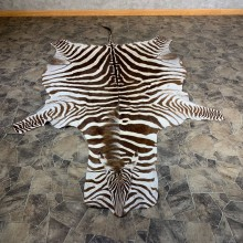 African Zebra Full-Size Taxidermy Rug For Sale #21861 @ The Taxidermy Store