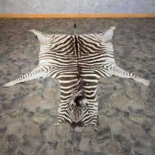 African Zebra Full-Size Taxidermy Rug For Sale #22115 @ The Taxidermy Store