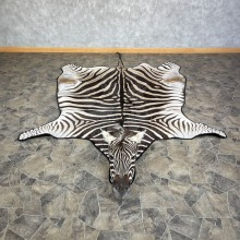 African Zebra Full-Size Taxidermy Rug For Sale #25271 @ The Taxidermy Store