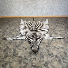 African Zebra Full-Size Taxidermy Rug For Sale #25272 @ The Taxidermy Store