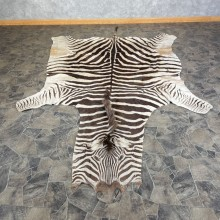 African Zebra Taxidermy Rug For Sale