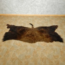 American Buffalo Rug For Sale #14728 @ The Taxidermy Store