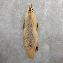 American Badger Tanned Hide For Sale #19671 @ The Taxidermy Store