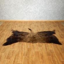 American Buffalo Bison Circle Taxidermy Rug For Sale #17444 - The Taxidermy Store