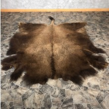 American Buffalo Bison Taxidermy Hide For Sale #20078 - The Taxidermy Store