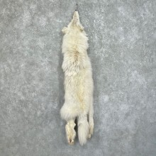 Arctic Wolf Tanned Hide For Sale #25343 @ The Taxidermy Store