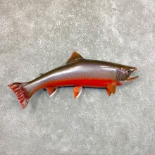 Atlantic Char Fish Mount #23891 For Sale @ The Taxidermy Store
