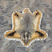 Badger Full-Size Rug Mount For Sale #23335 @ The Taxidermy Store