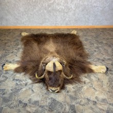 Barren Ground Muskox Full Size Rug For Sale #23683 @ The Taxidermy Store