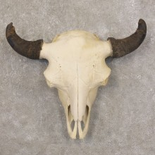 Bison Skull Mount For Sale #22583 @ The Taxidermy Store