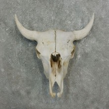 Buffalo Bison Skull Mount For Sale #17675 @ The Taxidermy Store