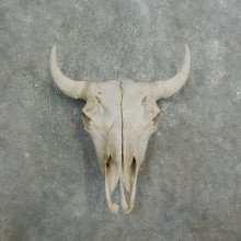 Buffalo Bison Skull Mount For Sale #17676 @ The Taxidermy Store
