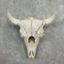 Buffalo Bison Skull Mount For Sale #17680 @ The Taxidermy Store