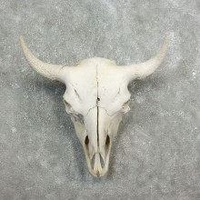 Buffalo Bison Skull Mount For Sale #17686 @ The Taxidermy Store