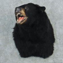 Black Shoulder Taxidermy Head Mount M1 #12798 For Sale @ The Taxidermy Store