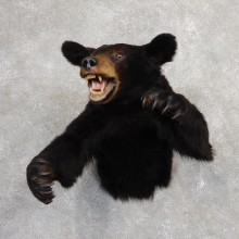 Black Bear 1/2-Life-Size Mount For Sale #19056 @ The Taxidermy Store