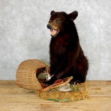 Black Bear Taxidermy Mount #18217 For Sale @ The Taxidermy Store