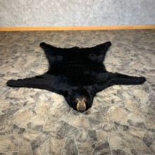 Black Bear Full-Size Rug For Sale #22112 @ The Taxidermy Store