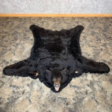 Black Bear Full-Size Rug For Sale #22535 - The Taxidermy Store