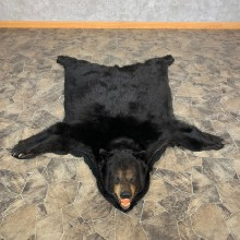 Black Bear Full-Size Rug For Sale #22694 @ The Taxidermy Store