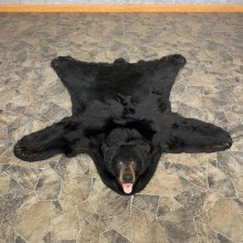 Black Bear Full-Size Rug For Sale #22695 @ The Taxidermy Store