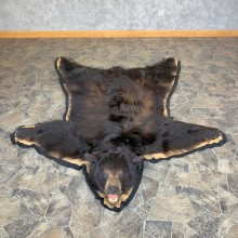 Black Bear Full-Size Rug For Sale #23319 @ The Taxidermy Store