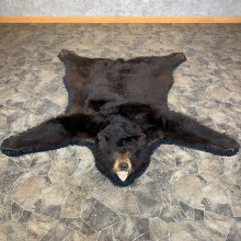 Black Bear Full-Size Rug For Sale #23330 @ The Taxidermy Store