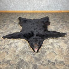 Black Bear Full-Size Rug For Sale #24561 @ The Taxidermy Store