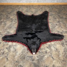 Black Bear Full-Size Rug For Sale #24565 @ The Taxidermy Store