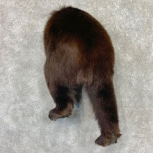 Black Bear Novelty Butt Mount For Sale #22569 @ The Taxidermy Store