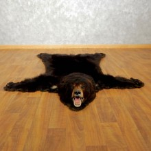 Black Bear Full-Size Rug For Sale #17503 @ The Taxidermy Store