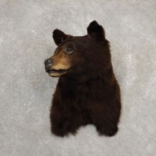 Black Bear Shoulder Mount For Sale #20526 @ The Taxidermy Store