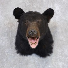 Black Bear Shoulder Mount For Sale #22358 @ The Taxidermy Store