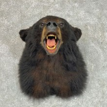 Black Bear Shoulder Mount For Sale #22812 @ The Taxidermy Store